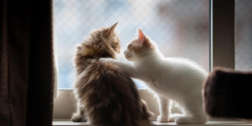Cats comforting each other - improve your communication